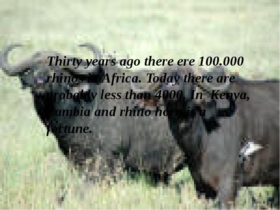 Thirty years ago there ere 100.000 rhinos in Africa. Today there are probably...