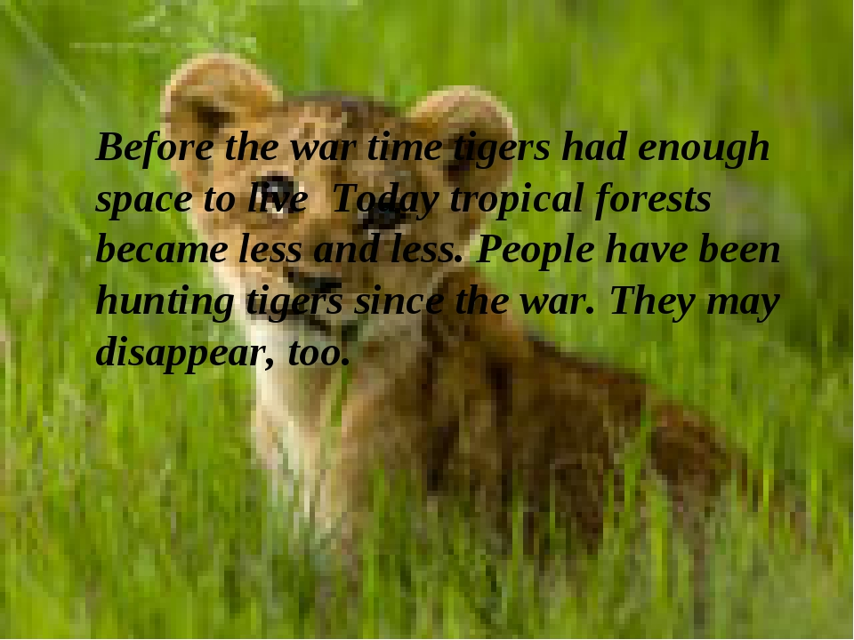 Before the war time tigers had enough space to live Today tropical forests be...