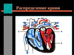 Распределение крови