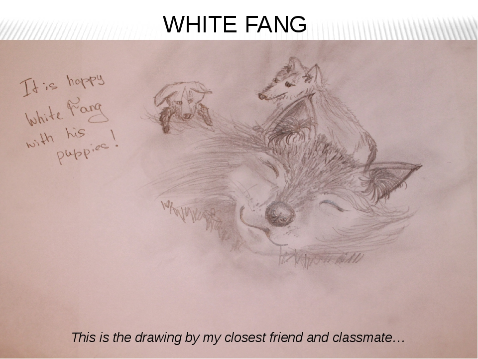 WHITE FANG This is the drawing by my closest friend and classmate…