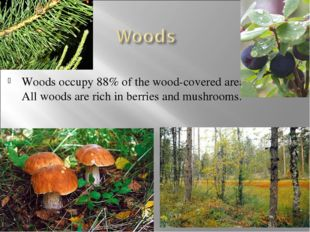 Woods occupy 88% of the wood-covered area. All woods are rich in berries and