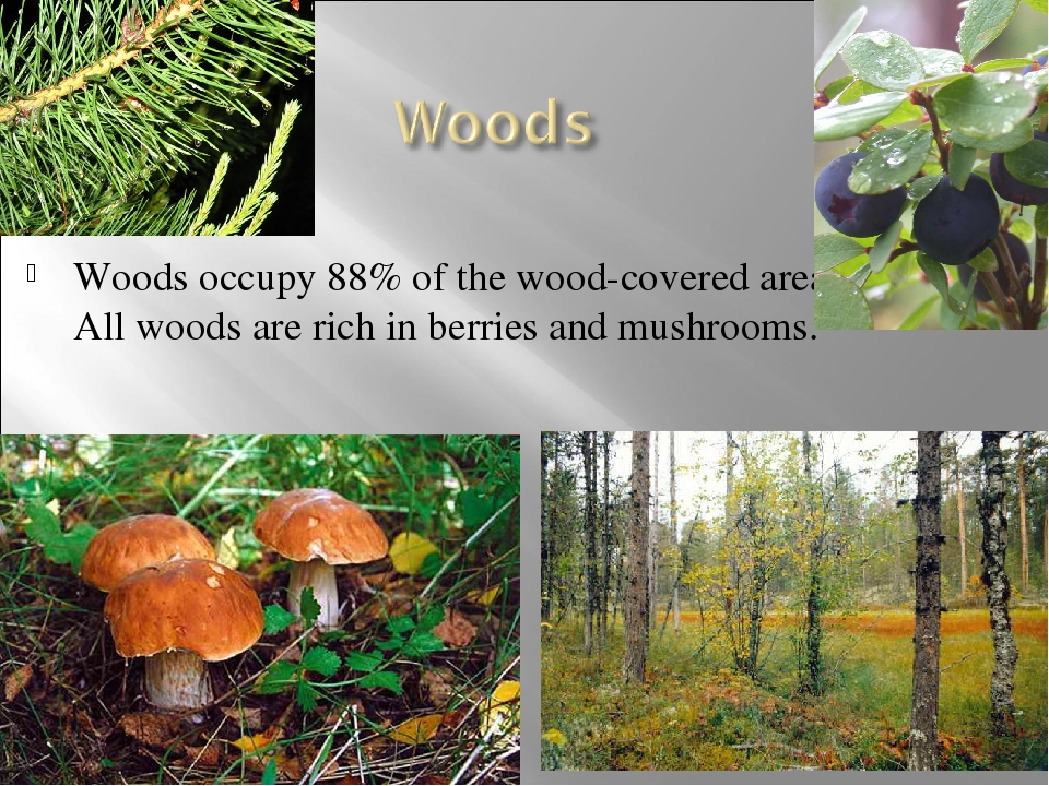 Woods occupy 88% of the wood-covered area. All woods are rich in berries and...