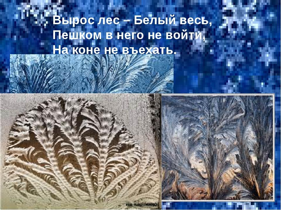 Вырос лес – Белый весь, Пешком в него не войти, На коне не въехать.