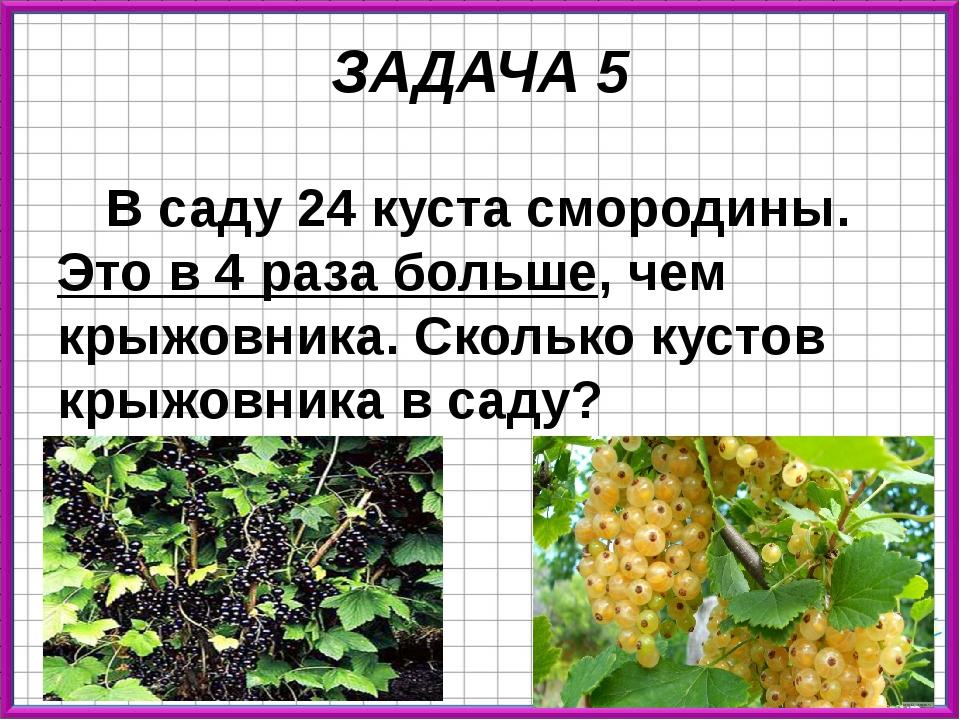 ЗАДАЧА 5 В саду 24 куста смородины. Это в 4 раза больше, чем крыжовника. Скол...
