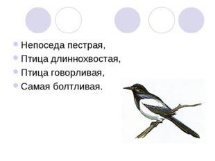 Непоседа пестрая, Птица длиннохвостая, Птица говорливая, Самая болтливая.