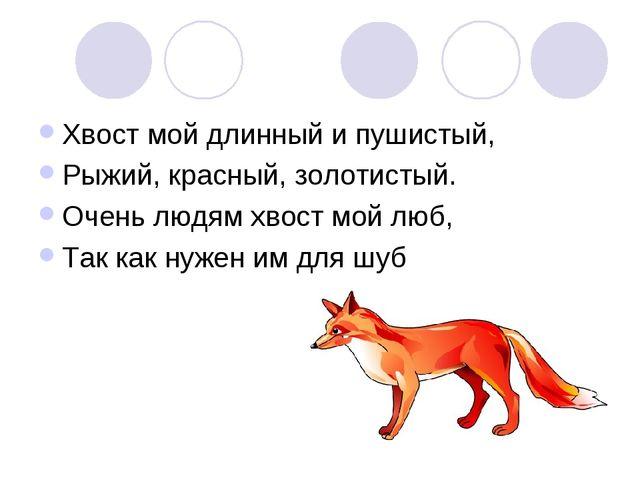 Хвост мой длинный и пушистый, Рыжий, красный, золотистый. Очень людям хвост м...