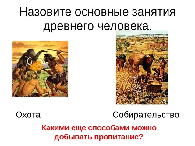 Назовите основные занятия древнего человека. Охота Собирательство Какими еще...