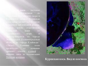 Ку́ршская коса́— песчаная коса, расположенная на побережье Балтийского моря и