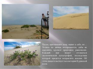Пески, притягивают взор, манят к себе, но… Ходить по дюнам воспрещается, дабы