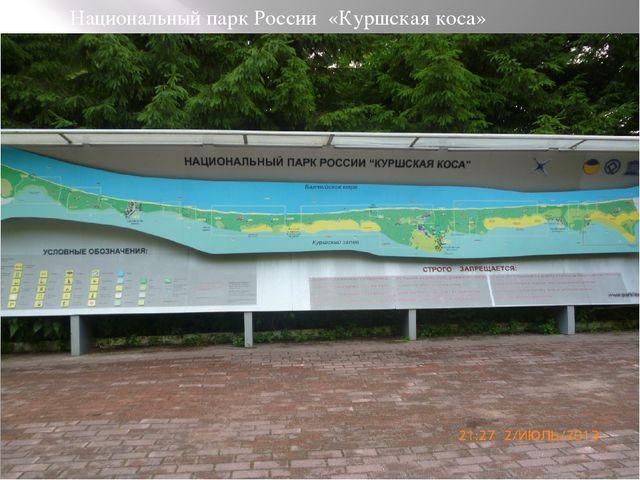 Национальный парк России «Куршская коса»