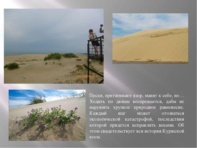 Пески, притягивают взор, манят к себе, но… Ходить по дюнам воспрещается, дабы...