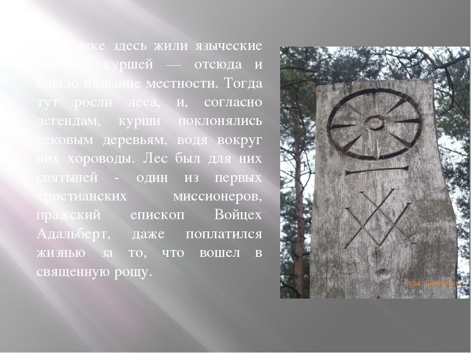 В IX веке здесь жили языческие племена куршей — отсюда и пошло название местн...
