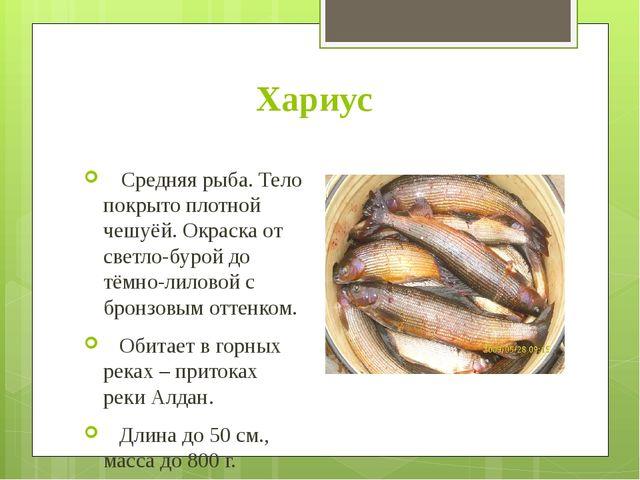 Хариус Средняя рыба. Тело покрыто плотной чешуёй. Окраска от светло-бурой до...