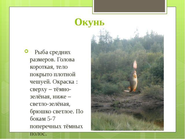 Окунь Рыба средних размеров. Голова короткая, тело покрыто плотной чешуей. Ок...