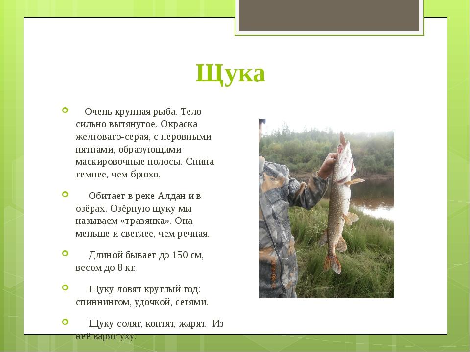 Щука Очень крупная рыба. Тело сильно вытянутое. Окраска желтовато-серая, с не...