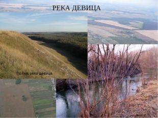 Пойма реки девица РЕКА ДЕВИЦА