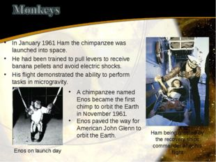 In January 1961 Ham the chimpanzee was launched into space. He had been train