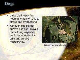 Laika died just a few hours after launch due to stress and overheating Althou