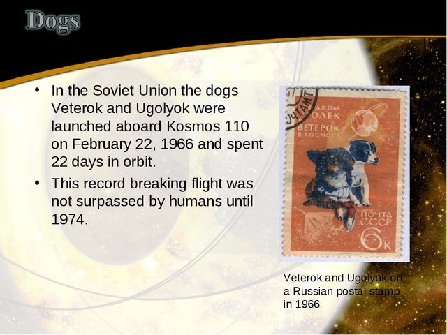 In the Soviet Union the dogs Veterok and Ugolyok were launched aboard Kosmos...
