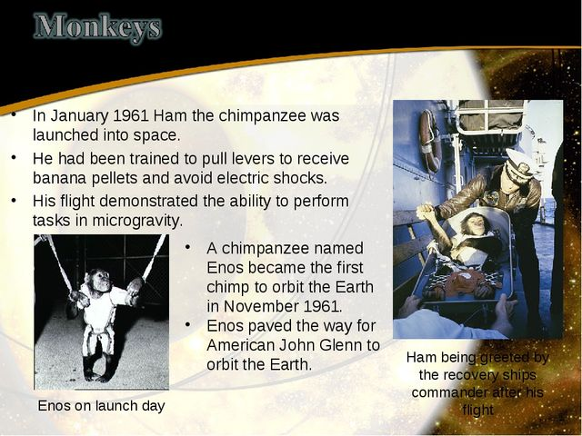 In January 1961 Ham the chimpanzee was launched into space. He had been train...
