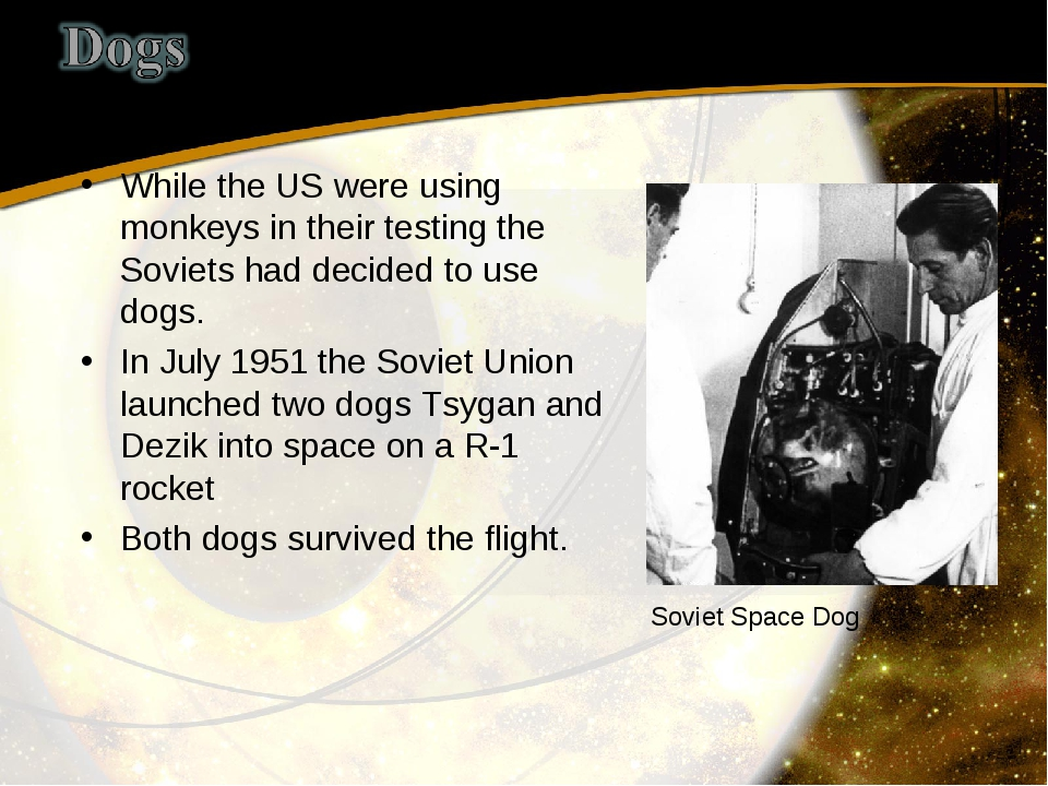 While the US were using monkeys in their testing the Soviets had decided to u...