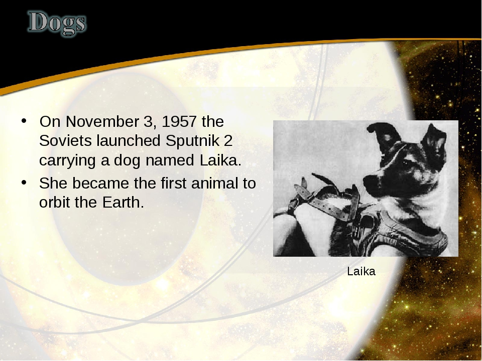 On November 3, 1957 the Soviets launched Sputnik 2 carrying a dog named Laika...