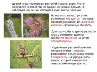 Цветки покрытосеменных растений знакомы всем. Кто не любовался их красотой, н