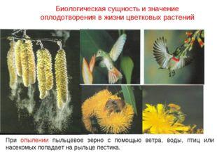 При опылении пыльцевое зерно с помощью ветра, воды, птиц или насекомых попада