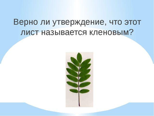 Верно ли утверждение, что этот лист называется кленовым?