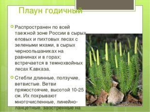 Плаун годичный Распространен по всей таежной зоне России в сырых еловых и пих