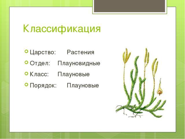 Классификация Царство: Растения Отдел: Плауновидные Класс: Плауновые Поряд...