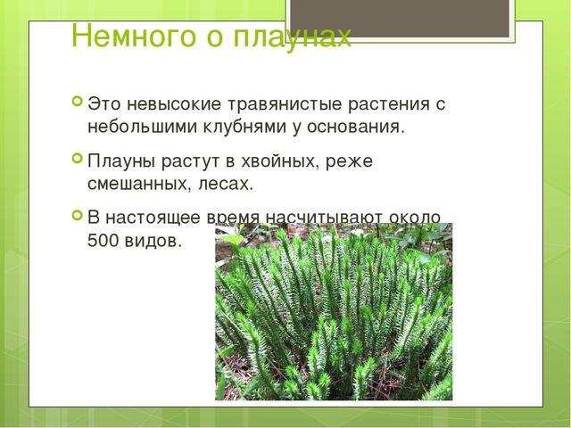 Немного о плаунах Это невысокие травянистые растения с небольшими клубнями у...
