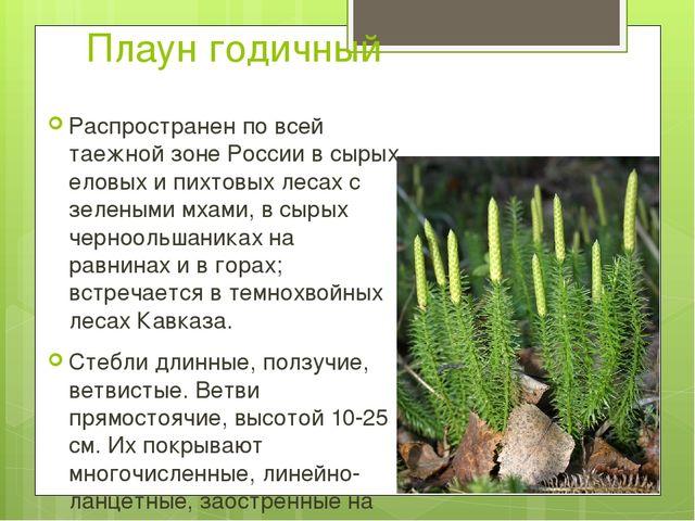Плаун годичный Распространен по всей таежной зоне России в сырых еловых и пих...