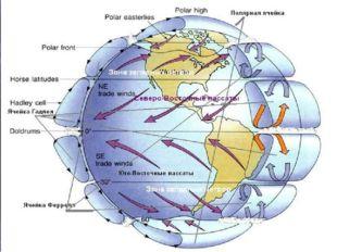 Во время вращения Земли вокруг своей оси в движении всех тел, находящихся на