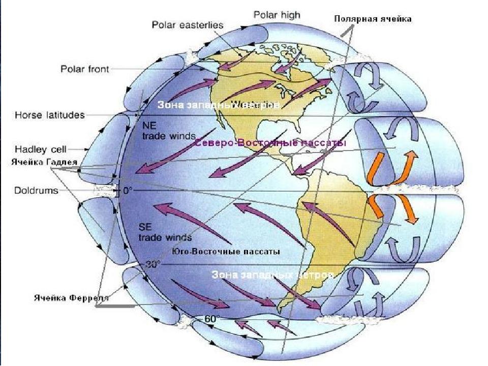 Во время вращения Земли вокруг своей оси в движении всех тел, находящихся на...