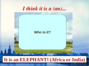 I think it is a (an)... Who is it? It is an ELEPHANT! (Africa or India)