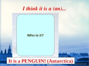 I think it is a (an)... It is a PENGUIN! (Antarctica) Who is it?