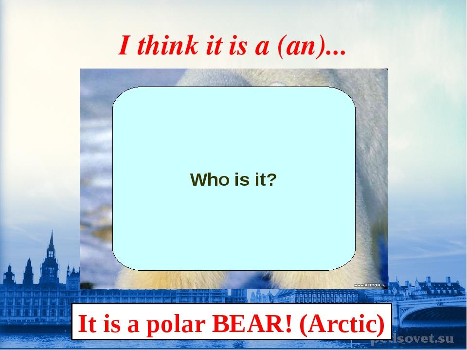 I think it is a (an)... Who is it? It is a polar BEAR! (Arctic)