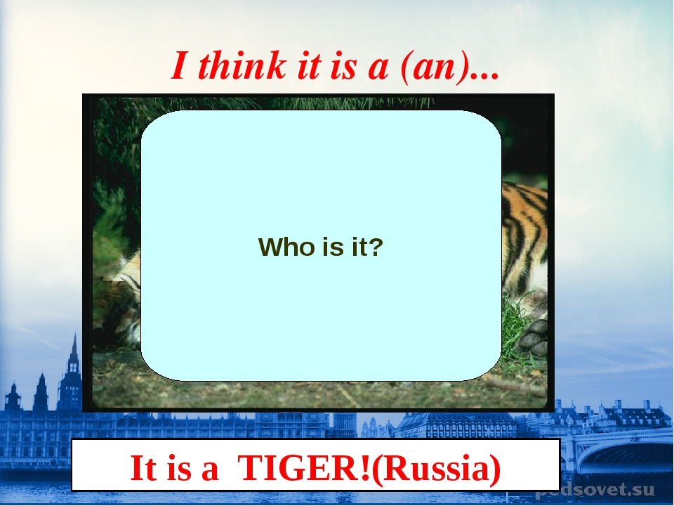 I think it is a (an)... Who is it? It is a TIGER!(Russia)