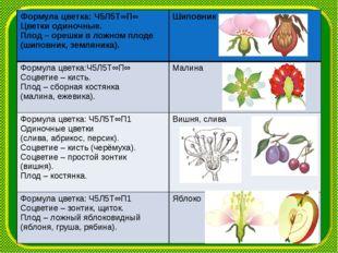 Формула цветка:Ч5Л5Т∞П∞ Цветки одиночные. Плод– орешки в ложном плоде (шипо