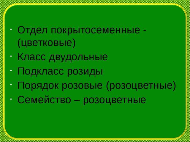 Отдел покрытосеменные -(цветковые) Класс двудольные Подкласс розиды Порядок р...