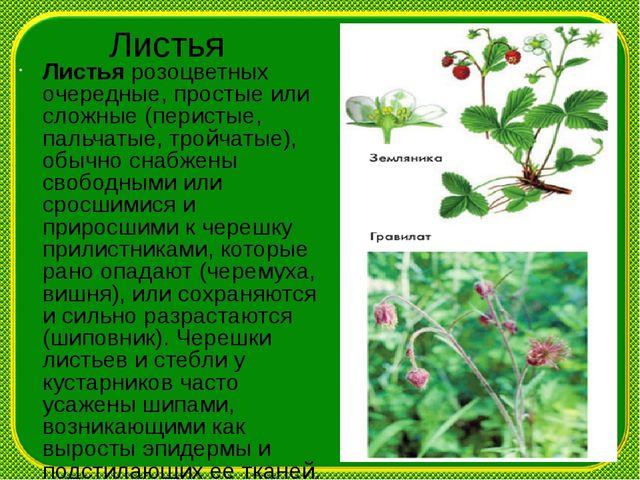 Листья Листья розоцветных очередные, простые или сложные (перистые, пальчатые...