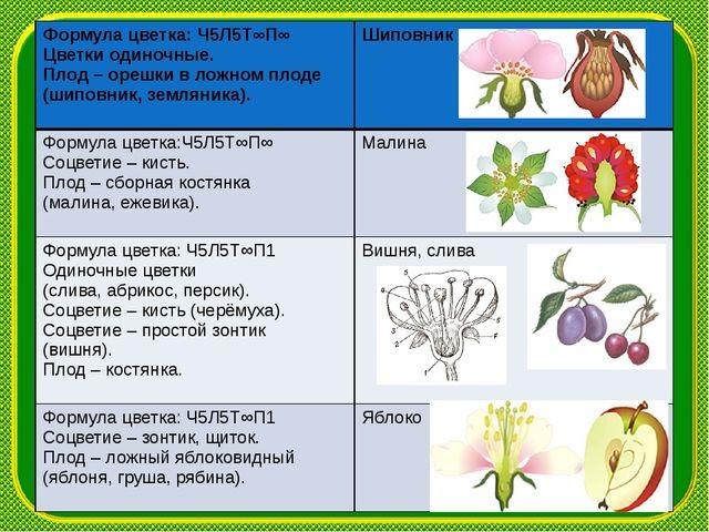 Формула цветка:Ч5Л5Т∞П∞ Цветки одиночные. Плод– орешки в ложном плоде (шипо...