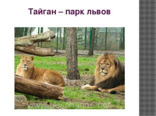 Тайган – парк львов