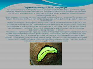 Характерные черты типа следующие: Телоплоское,его форма листовидная (у ресн