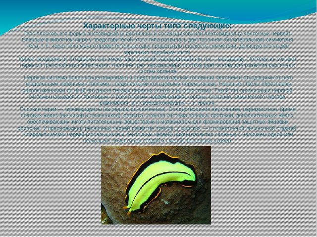 Характерные черты типа следующие: Телоплоское,его форма листовидная (у ресн...