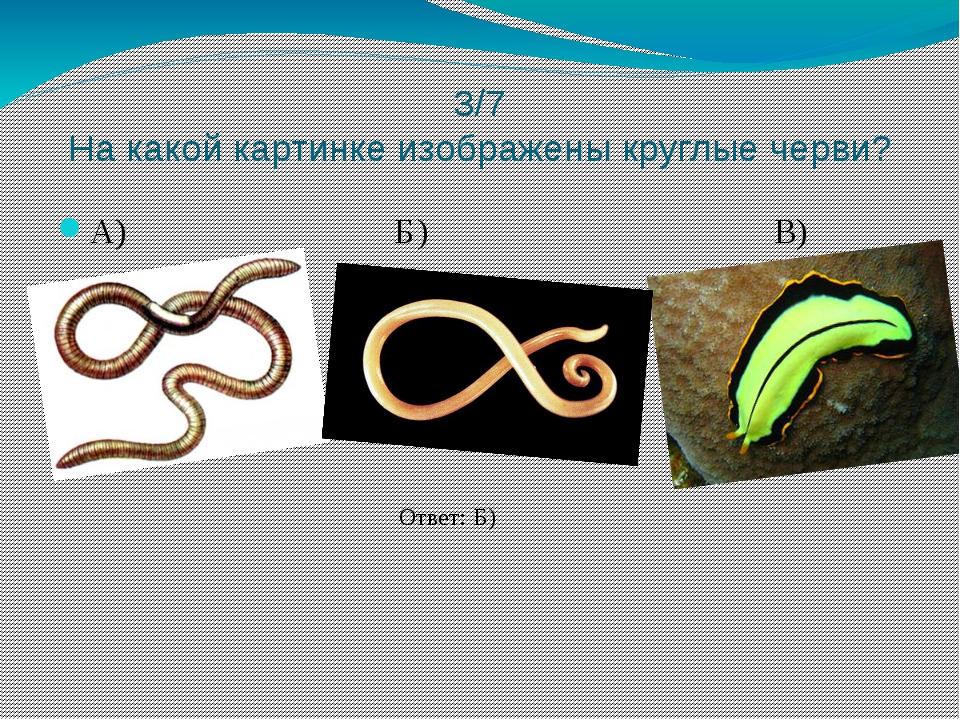 3/7 На какой картинке изображены круглые черви? А) Б) В) Ответ: Б)