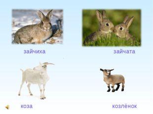 коза                                                козлёнок        коза