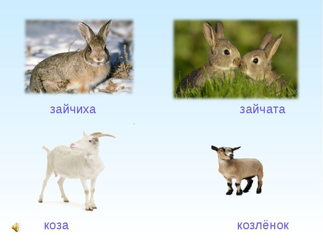 коза                                                козлёнок        коза...