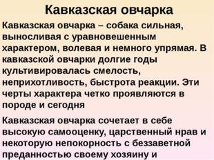 Кавказская овчарка Кавказская овчарка – собака сильная, выносливая с уравнове